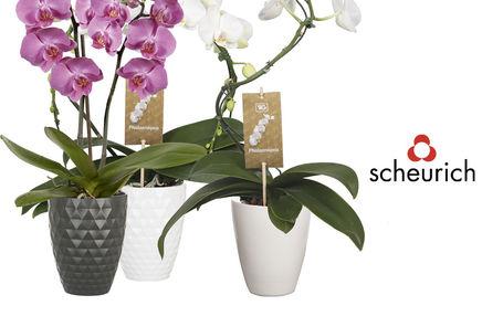 Pflanzgefäße - Blumen Risse